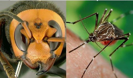 Morso e Punture di insetti: gestione, cura e prevenzione